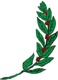 Um ramo de café frutificado à sinistra